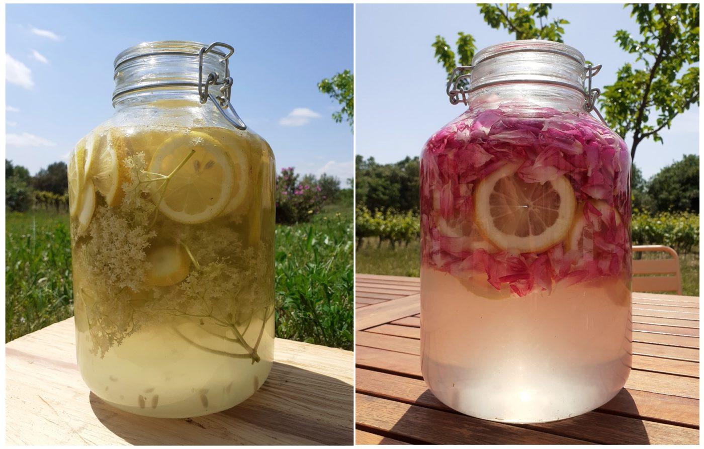 limonade à la fleurs de sureau et aux pétales de rose